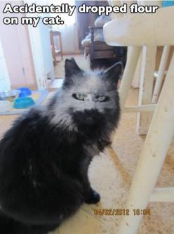 Hahaha the more you look the funnier it gets!!! Hahaha: Cats, Giggle, Cat Face, Animals, Dropped Flour, Funny Stuff, Funnies, Cat Lady