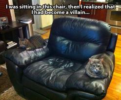 Holy crap, Pace, it's Bullet and Liger! And Gramma's recliner.: Cats, Chair, Funny Picture, Funny Stuff, Humor, Funnies, Animal