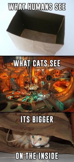How Cats See The World: Cats, Whovian, Stuff, Timelord, Funny, Dr. Who, Doctor, Time Lord, Animal