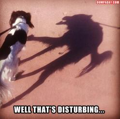 I don't know why, but this is funny.: Giggle, Animals, Dogs, Funny Stuff, Humor, Funnies, Things, Shadows