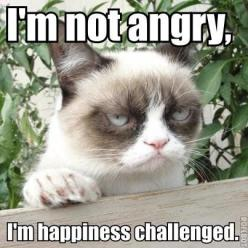 I love this cat! I have spent a solid amount of time just looking at grumpy cat memes.: Cats, Grumpycat, Funny Cat, Funny Stuff, Grumpy Cat, Happiness Challenged, Animal, Funnie