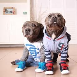 Look at you in your sports outfits! GO TEAM! | These Pit Bull Brothers Are Taking Over Instagram: Animals, Dogs, Pitbulls 3, Pets, Pitbulls In Pajamas, Puppy, Brother