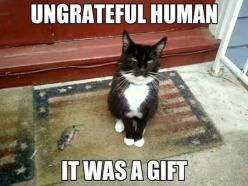 Mouse Treat....Had a cat that used to bring field mice and chipmunks home for the wife....cat could not understand why wife was so upset with her gifts.....: Cats, Animals, Gifts, Funny Stuff, Funnies, Humor, Funny Animal, Kitty, Ungrateful Human