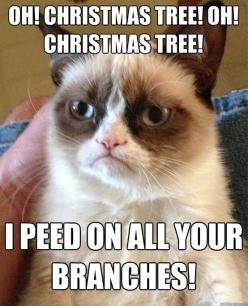 Oh Christmas Tree, Oh Christmas Tree! I peed on all your branches!  #grumpycat #meme: Grumpy Cat Christmas Funny, Christmas Grumpy Cat Memes, Grump Cat Humor, Grumpy Cat Christmas Meme, Funny Grumpy Cat, Grumpy Cat Funny, Grumpy Cat Humor Funny, Even Grum