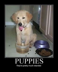 Pretty much…but they're so cute: Animals, Dogs, Puppys, Funny Stuff, So True, Funnies, Smile