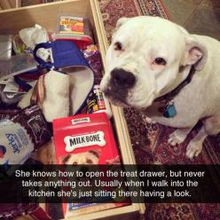 Respect The Treat Drawer: Funny Animals, Dogs Dogs, Sweet, Treat Drawer, Animals Dogs, Cutest Animals, Dogs Piddies, Photo, Animals But Seriously