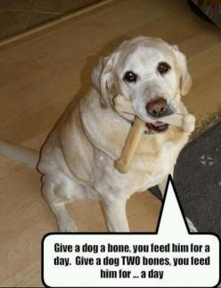 so true about my dogs. Give them 1 bone and it lasts all day, dump the bag of bones in their toy box...they eat them all in 1 day. lol: Funny Dogs, Funny Pictures, Animal Fun, Funny Dog Pictures