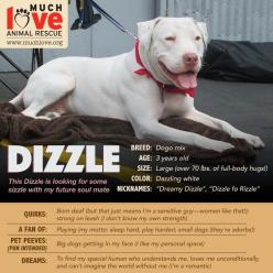 This dizzle is looking for some sizzle with his future soulmate!   Learn more at www.muchlove.org: Fur Ever Homes, Cuties Needing, Future Soulmate, Needing Fur Ever, Muchlove Org, Soulmate Learn