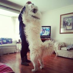 this is what I have to look forward to! my big, strong man!: Dogs Pets, Eye