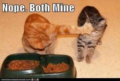 This photo is not of my cats, but it totally could have been.  Ollie, my chubby orange boy, was my eater and Abner sometimes couldn't get his fair share.: Animals, Funny Cats, Funny Stuff, Humor, Funnies, Mine, Funny Animal, Kitty