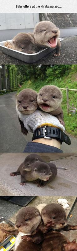 Tiny Baby Otters: Baby Brother, Baby Otters, Baby Sea Otters, Cute Otter, Cutest Pet, Box, Funny Animal, River Otter, Cute Baby Animal