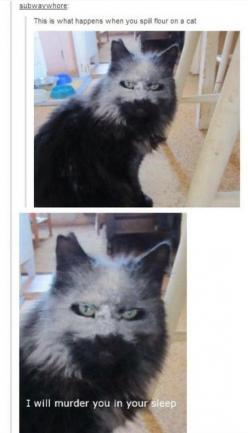 XD: Cats, Funny Truth, Evil Cat, Funny Post, Funny Cat, Tumblr Cat, Funny Tumblr Post, Animal