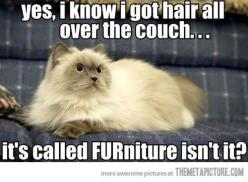 Yes, I know I got hair all over the couch. It's called FURniture, isn't it? #cats #funny #pictures: Cats, Funny Animals, Funny Cat, Pet, Funny Stuff, Funnies, Furniture, Kitty