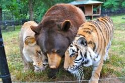Amazing how under different circumstances these animals never would have met but now are best buds.!: