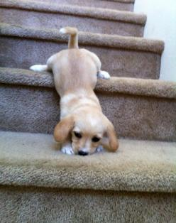 If I were a dog, I would probably do this exact Same thing every time I come down the stairs on a weekend.
