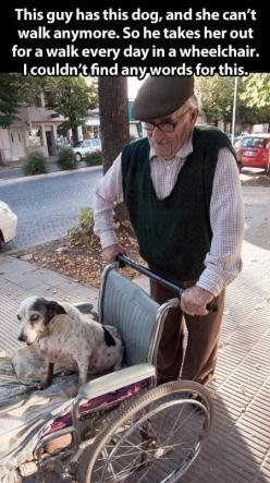 This guy has this dog and she cant walk anymore. So he takes her out for a walk everyday in a wheelchair.: Animals, Sweet, Dogs, Humanity Restored, Pet, True Love, Walk, Friend