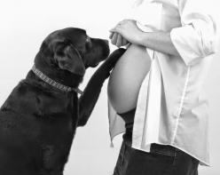 5 amazing things your dog can sense once you are pregnant: Baby Announcement, Photo Ideas, Pregnancy Photos, Maternity Pics, Announcement Ideas, Pregnancy Announcement, Dog, Maternity Photo