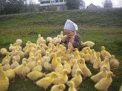 A young girl on a diplomatic mission to the ducklings. | 41 Pictures You Need To See Before The Universe Ends: Farm, Babies, Animals, Ducks, Children, Kids, Baby, Photo, Birds