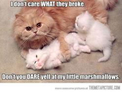 ahhhhhhhhhhhhhhhhhhhhhh!! they're so cute!! @Sara Sprangers: Cats, Animals, Kitten, Stuff, Funny Animal, Marshmallows, Kitty