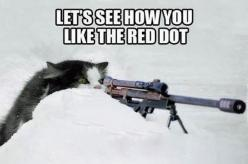 Fun Claw - Funny Cats, Funny Dogs, Funny Animals: Funny Cat Pictures - 22 Pics: Funny Cat Pictures, Animal Funnies, Funny Cats, Red Dots, Dog Funnies, Funny Animal, Cat Sniper, Fun Claw, Cats Funny