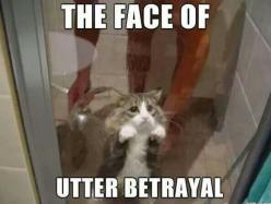 Funny cat: Funny Animals, Cats, Kitty Cat, Faces, Funny Cat, The Face, Poor Kitty, Shower Time, So Sad
