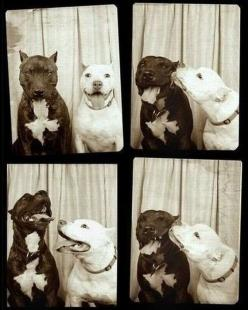 Hopefully, one day Pits will not have bad reputations because of irresponsible owners. I'm pretty sure my dad owned a 3 legged weenie dog that was probably more harmful than most Pits. : ): Photos, Animals, Dogs, Pet, Photobooth, Photo Booths, Puppy