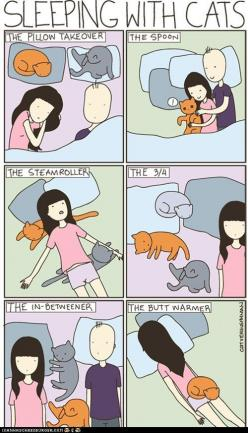 lol cats: Cats, Butt Warmer, Funny, So True, Crazy Cat, Sleeping, Pillow Takeover, Animal, Cat Lady