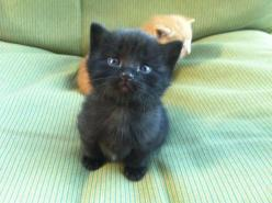 Look At That Face!!!: Animals, Black Cats, Pet, Adorable, Kittens, Baby, Kitty