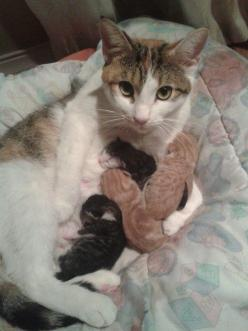 Mama and her babies: Cats, Animals, Mothers, Pet, Baby, Kittens, Kitty