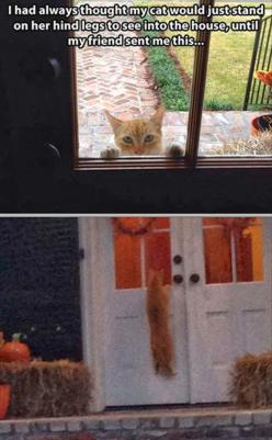 My cat used to do this lol: Funny Animals, Kitty Cat, Stuff, Funny Cats, Crazy Cat, Funnies, Cat Lady