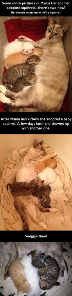 Random Pictures Of The Day - 62 Pics: Cats, Sweet, Baby Squirrels, Adopted Squirrels, Cat Adopts, Adopts Squirrel, Mama Cat, Kitty, Animal