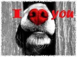 So sweet... I will probably never see a dogs nose quite the same again once I saw this sweet picture!: Animals, Heart, Dogs, Love You, Pet, Valentines Day, Loveyou, Dog Nose
