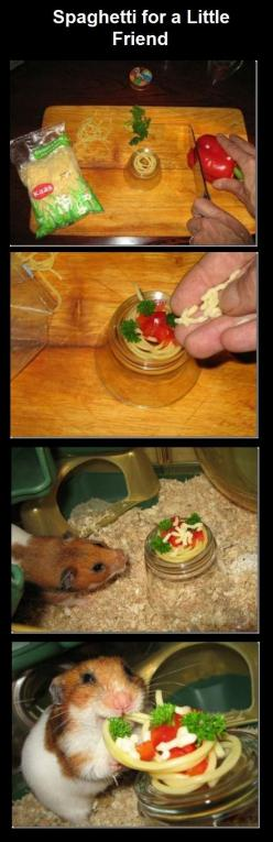 Spaghetti for a little friend. - Imgur: Animals, Friends, Spaghetti, Pet, Funny, Hamsters, So Happy, Things