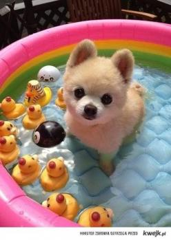 38 Brillant Dog Care Ideas to Make Your Life easier!: Doggie, Dogs, Pool, Pet, Puppys, Dog Care, Life Easier, Animal
