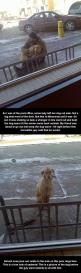 This dog needs booties and a jacket.  Or better yet, leave him at home.  He doesn't need walkies in -20 weather.  Dogs get cold too…: This Man, Dog Owners, Animal Cruelty, Guy, Faith In Humanity Restored, Hope For Humanity, Awesome Humanity, Faith Res