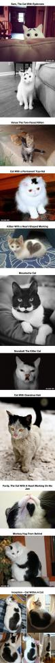 10 Cats That Got Famous For Their Awesome Fur Markings - Just DWL || The Ultimate Trolling: 10 Cats, Fur Markings, Crazy Cat, Kitty, Animal, Awesome Fur, Cat Lady