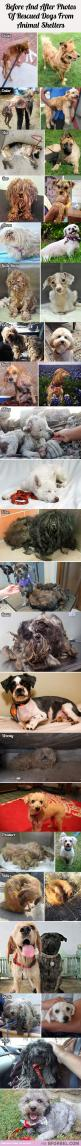 16 Before And After Photos Of Rescued Dogs From Animal Shelters…: Animal Rescue, Rescued Dogs, Photo, Animal Shelter