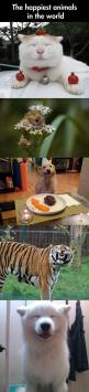 ahhhh, i'm dying from the cuteness! the dog smiling on her birthday with her steak is the cutest thing i've ever seen: Absolute Happiness, Funny Animals, Funny Pets, Smiling Animals, Animal Funnies, Animals Funny, Happy Animals, Dogs Funnyanimals,