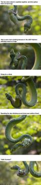 Amazing !!: Funny Pics, Funny Pictures, Odd Couple, Animal Friends, Funny Photos, Amazing Animals, Frogs, Snakes, Friends Spending