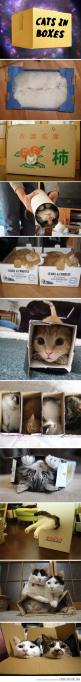Because they always fit…: Cats Cats, Cats In Boxes, Cardboard Boxes, Boxed Cat, Cat Love, Awww Cats, Kitty, Animal