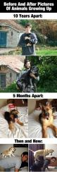 Before And After Photos Of Animals Growing Up: Catsandme Cats, Dog Cat Mice, Fashion Picture Cats, Growing Up, Dogs Puppies Cats, Cats Doghealthcareblog, Picture Cats Picture Food, Animals Growing