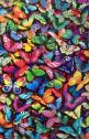 butterflies optical illusions: Multi Colored Butterflies, Butterfly, Animals, Colorfull Butterflies, Iphone Wallpaper, Multicolor, Coloured Butterflies