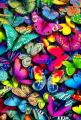 Color theory therapy| Serafini Amelia| butteryfly art- colors.: Beautiful Butterflies, Colour, Butterfly, Art, Rainbow Colors, Photo