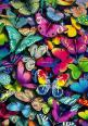 Colorful butterflies are my token of my friendship to Jeanne. She has shown much loving kindness to me through our friendship. My hope these will multiply & fill her with the Holy Spirit delivering HOPE upon her. GOD BLESS YOU JEANNE♡: Colour, Beautif