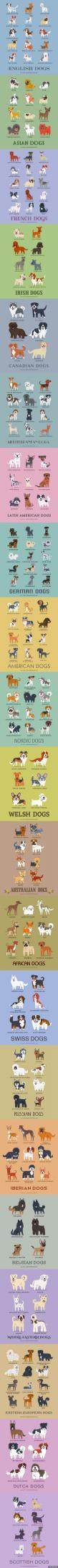 Dogs of the world, unite!: Doggie, Beagle Dog, Dog Breeds, Puppy Breed, Animal, Scottish Dog