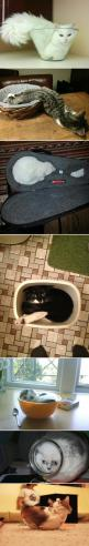 haha these are all so great!!!!!!!!!!!! #cats: Kitty Cats, Funny Cat, Cats Fit, Liquid Cats, Animal, Cat Lady