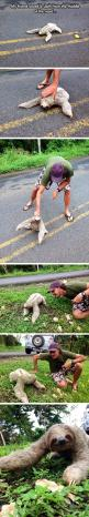 I love the sloth: Random Pictures, Sloths Funny, Faith In Humanity Restored, Sloths ️ ️ ️, Faith Restored, Awww Sloths, Road, Friend, Animal