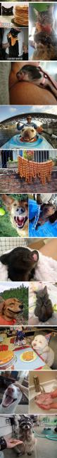 Just Happy Pets: Hedgehog, Cat, Critter, Fluffy, Happy Animals, Beautiful Smile, Pet, Funny Animal