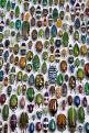 Meet the Beetles: The Beatles, Natural History, L'Wren Scott, Beetles