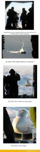 Photographing a fighter pilot: Fighter Jet Pilot, Airplanes ️, Jet Fighter, Military Airplane